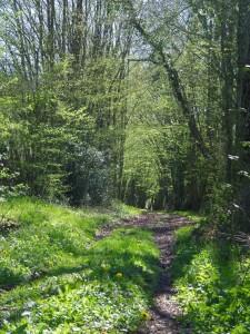 Chemin la Planche Bouchard