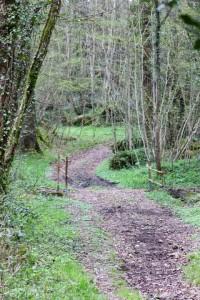 Chemin bois de la Chesnuère