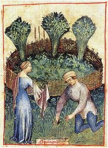 Jardin médiéval entouré de plesses